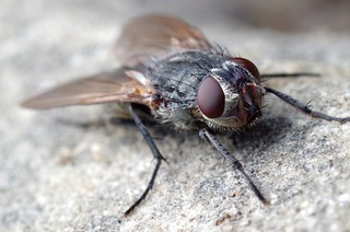 Ugly Fly (HFDF!)