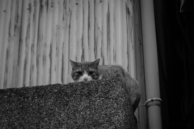 Today's Cat@2014-05-03