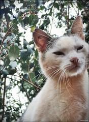 Gatinho (Gyiti.br) Tags: gato laguna árvore gatinho árvores imagem gatobranco carapã lagunacarapã gyiti