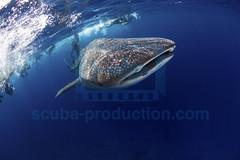 2013 12 VOISIN MALDIVES-4199