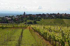 In the vines around Riquewihr (Pug Girl) Tags: food france wine vineyards alsace