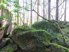 Wandelen in de groene natuur