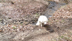 """Chase As He Climbs Out Of The Steep Stream • <a style=""""font-size:0.8em;"""" href=""""http://www.flickr.com/photos/96196263@N07/14209661523/"""" target=""""_blank"""">View on Flickr</a>"""