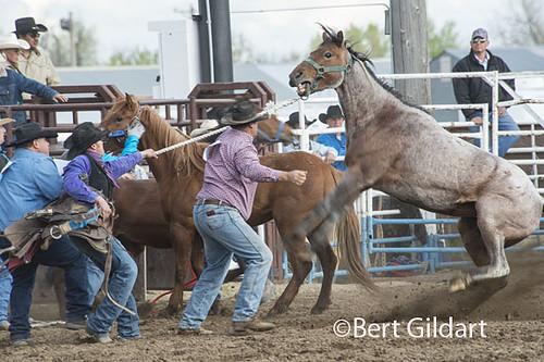 Bull Riders-1