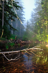 Tumble Lake Outlet (Xuberant Noodle) Tags: fog oregon forest stream