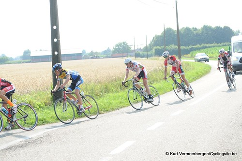 Geel Oosterlo  (164)