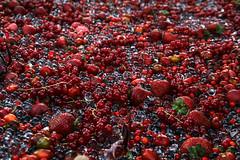 Fruit (Saja Rijskamp) Tags: macro nature fruit strawberry berry berries strawberries ilobsterit
