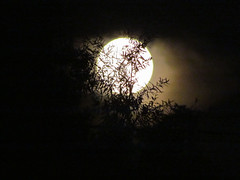 SUPERMOON, July 2014 (MacGuffin56) Tags: fullmoon lunar raleighnc supermoon