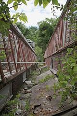IMG_9656 (Jeffrey Terranova) Tags: newyork abandoned graffiti greenhouse urbanexploration bti yonkersny boycethompsoninstitute canonrebelxsi