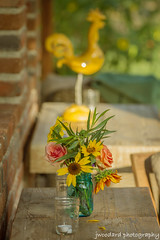 Flowers & Chicken (Jeff Woodard Photography) Tags: flowers chicken del mexico los flora cabo san jose farms cabos