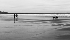 South Shields beach walkers and dogs (stevieboy2343) Tags: southshields shields beach dogs sea walkers bw blackandwhite mono sand couple pair dog silhouette