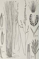 Anglų lietuvių žodynas. Žodis cataphyll reiškia katapilis lietuviškai.