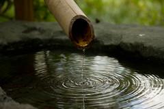IMG_6025.jpg (donkeyotey) Tags: water japanesegarden ripple bamboo saintlouis botanicalgarden