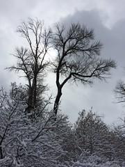 IMG_2222 (augiebenjamin) Tags: winter provocanyon mountains orem provo lindon utah snow clouds trees sky byu brighamyounguniversity art