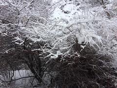IMG_2208 (augiebenjamin) Tags: winter provocanyon mountains orem provo lindon utah snow clouds trees sky byu brighamyounguniversity art