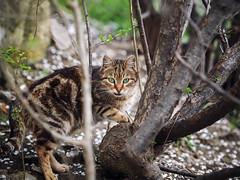 Street cat 181 (Yalitas) Tags: cat cats кот кошка котка kedi chat feline kat katze katzen kot kotka pet felino kottur katte kass kitty gato kocka gatta katzchen streetcat canon