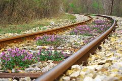 Railroad (sevdelinkata) Tags: railroad bulgaria