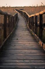 Path (DanAie) Tags: path nature composition symmetry symmetric spring sun simmetria composizione travel travelphotography photography pentax tuscany toscana wooden wood italia italy lucca massaciuccoli lago lake golden hour goldenhour