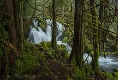 Mossy Daze - Vancouver Island, Canada (Thomas J Dawson) Tags: vancouverislandwaterfalls mossy forest thomasdawsonphotography