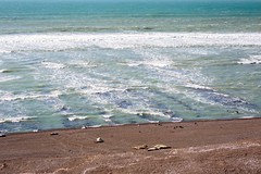 Elefantes Marinos (Pablo Rodriguez M) Tags: argentina puerto madryn elefantes marinos