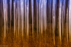ICM -the curtain comes down (Ralf_Budde) Tags: flickr mitzieher ralfbudde forest colors purple orange nature icm curtain wood trees natuer abstract art