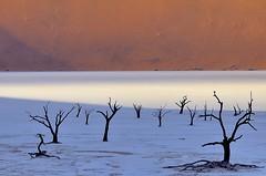 Namibia, Deadvlei (Vittorio Ricci (thanks +++ 2.7 millions views)) Tags: namibia namibdesert deadvlei sesriem sossusvlei deadtrees petrifiedtrees acacia