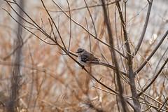 Not a Blue Heron (brev99) Tags: d610 tamron70300vc topazdetail topazdenoise nature tulsa riverwalk bird branches photoshopelements12