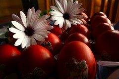 (Teteel) Tags: easter redeggs red colours daisies flowers greece ελλάδα