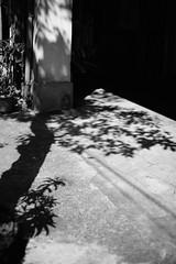 0121 (**Hu) Tags: taiwan kaohsiung hamasen trees bw street shadow spring single 台灣 高雄 哈瑪星 黑白 街拍 光影 光 ひかり とおり 單色 rayo ciudad city rue asia