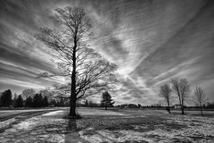 Early Spring Maple—2 (Conrad Kuiper) Tags: 7dmkii maple canon sigma 1020mm cloudsstormssunsetssunrises winter black white hdr pcobapril2017