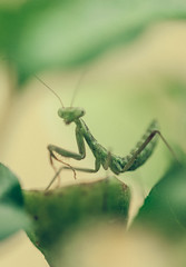 (Mr Bohke) Tags: color mantis naturaleza insectos macro desenfocado plantas animales nature bokhe insect plant