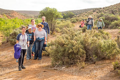 COP burra district field trip - red banks cp - apr 2017 - 4220861 (COPbiodiversity) Tags: pglc activities activity adelaidemetropolitan arid australia australian autumnfieldtrip baldinacreek billdoyle burra care cityofplayford community communitygroup cop council fieldtrip greening group hike hiking land landcare mallee midnorth mountloftyranges north northern playford playfordgreening playfordgreeningandlandcare pool redbanks redbanksconservationpark redbankscp reserve sa semiarid shrubland southaustralia southaustralian trail volunteer volunteering walker walkingtrail