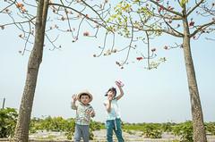 Happy Day (藍川芥 aikawake) Tags: happy children kid child littlegirl littlechild sunnyday sunshine cute play kapok outdoor nature 木棉花 小孩 遊戲 開心 happiness friends ricohgr
