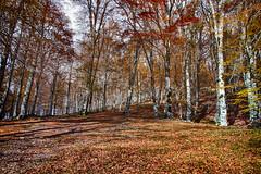 Sottobosco HDR (SDB79) Tags: bosco sottobosco foresta foglie foliage pizzone molise hdr natura autunno