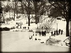 Winding Path (C@mera M@n) Tags: centralpark lake monochrome nyc newyork newyorkcity newyorkphotography park people place places sepia winter ice outdoors urbanlife