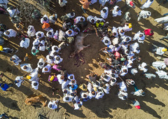Aerial view of the slaughter of a bull during the Gada system ceremony in Borana tribe, Oromia, Yabelo, Ethiopia (Eric Lafforgue) Tags: above aerial aerialview africa animal arab badhaasa boran borana borena bull celebration ceremony circle colourpicture cow crowd cruel culturalheritage cultures drone eastafrica ethdrone031718 ethiopia gaada gada gadasystem gadaa groupofpeople horizontal hornofafrica oromia oromiya oromo oromya outdoors sacrifice slaughter togetherness traditionalculture traditions tribalculture unesco unrecognizableperson yabello yabelo