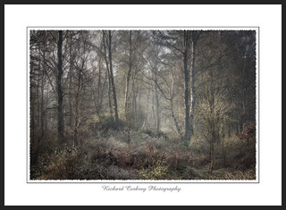 Stedham Common in Morning Mist