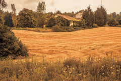 _Q9A5453 (gaujourfrancoise) Tags: france southwest sudouest charente fields champs été summer ocher ocre