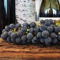 Oakridge (Peter.Bartlett) Tags: victoria australia oakridge winery grapes wine bottle label vsco iphone7 cellphone mobilephone square stilllife