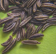 Caraway Seeds (j_rogers008) Tags: macromondays seed seeds memberschoiceseeds