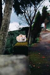 cnv000009 (雅布 重) Tags: nikon f100 nikkor 50mm f14d rossmann100 film cat 2017 taiwan