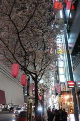 IMG_0529 (digitalbear) Tags: canon powershot g9x markii mark2 nakano dori sakura cherry blossom blooming fullbloom tokyo japan yozakura hanami