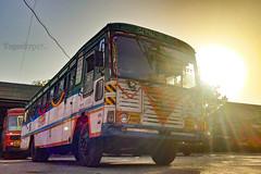 Thane - Hyderabad (yogeshyp) Tags: msrtc maharashtrastatetransport msrtcasiadbus msrtchirkanibus thane2depotbus thanehyderabadstbus