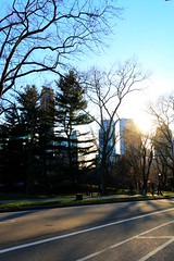 Low sun in Central Park. (chelseyedwardss) Tags: spring sun lowsun nature trees newyork centralpark