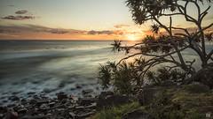 Morning bliss (BAN - photography) Tags: sunrise sun cloud surfers seascape pandanustree grass rocks longexposure cliff branches fruit ocean sea pacific d810 burleighheads goldcoast