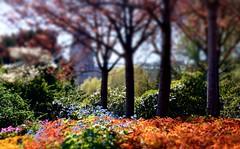 Sunny lights and colours (farmspeedracer) Tags: nature spring april flower blume fleur blue bleu germany garden park sunny sunbeam warm sunday
