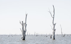 Lake Mulwala (laurie.g.w) Tags: lake mulwala victoria nsw border deadtrees water anthropocene eosm