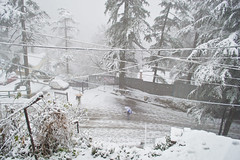 (keeper of the keys) Tags: india snow shimla snowfall winters himachalpradesh