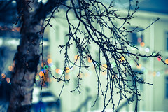 Dotted colours (Huey Yoong) Tags: winter snow cold tree nature iceland branch dof bokeh colourful scandinavia fairylights akureyri pristine travelphotography landscapephotography hbw northiceland nikond600 happybokehwednesday nikkor28300mmvr