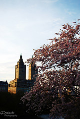 (GCostache) Tags: life city sunset tree nature water museum work photography spring day centralpark blossoms sunny enjoy amnh theview nosleep